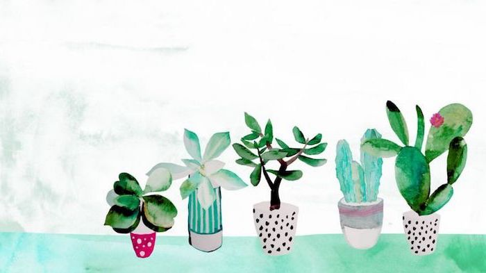 girl wallpapers for iphone, potted cactuses and plants, on a white background