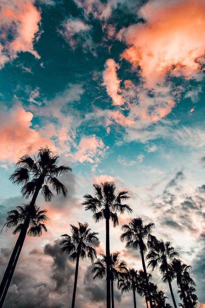 blue sky with clouds, tall palm trees, aesthetic iphone wallpaper
