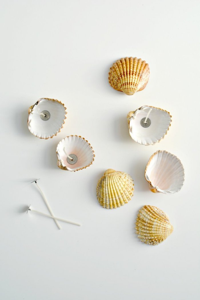 seven seashells, candle wicks inside, cute diys, white background