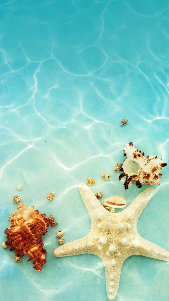 turquoise water, seashells on the sand, cute backgrounds