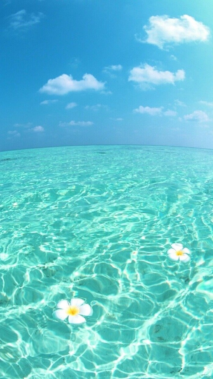 blue sky, turquoise ocean water, cute backgrounds, white flowers floating
