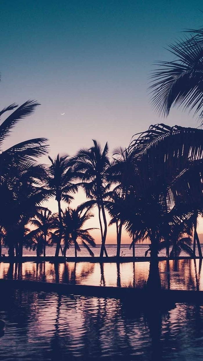 sunset sky, girly wallpapers, black palm trees, in the water