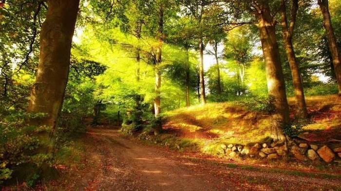 sun shining, through the trees, cute desktop backgrounds, path through the forest