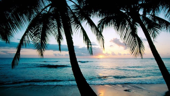 tall palm trees, over the beach, cute summer wallpapers, sunset sky, ocean waves