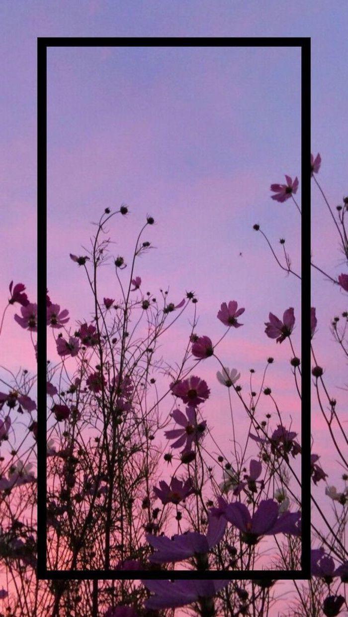 sunset sky, purple flowers, purple and pink sky, cute lockscreens