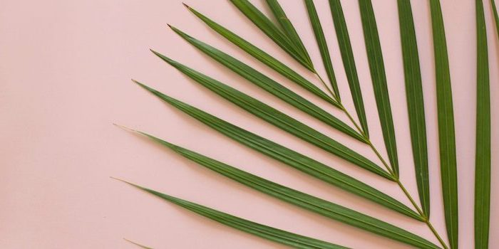 green palm tree leaf, on a pink background, cool wallpapers
