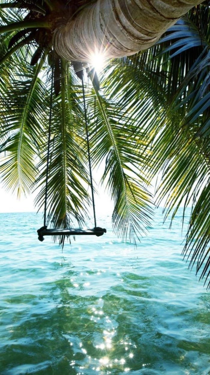 swing on a palm tree, cute lockscreens, pal tree over the ocean water