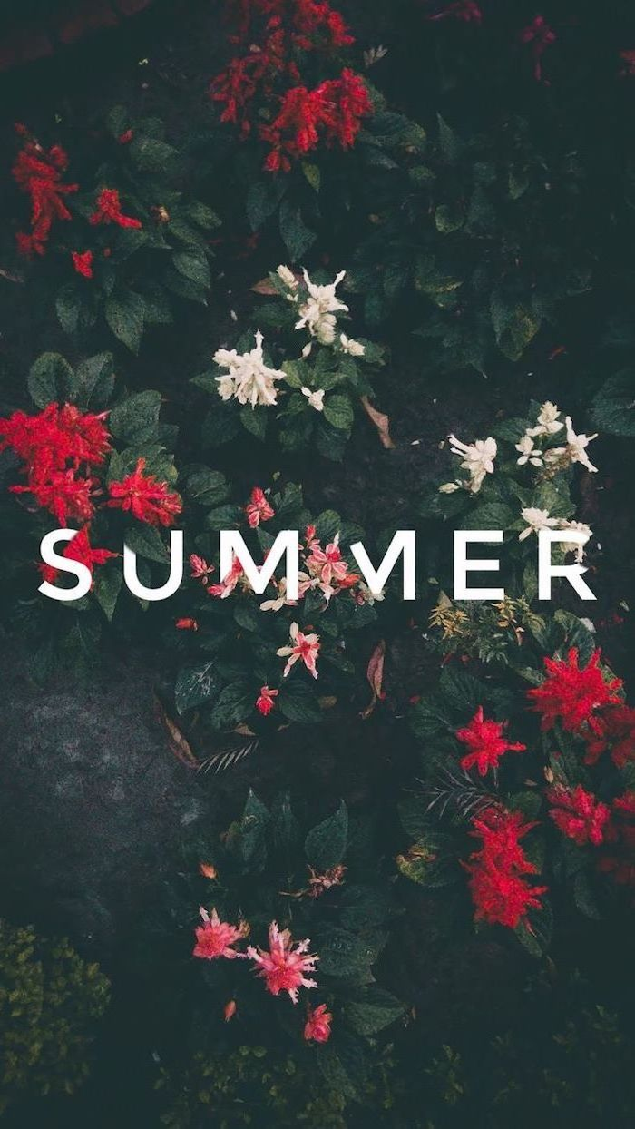 cute phone backgrounds, floral wallpaper, summer wallpaper, red flowers, dark green bushes