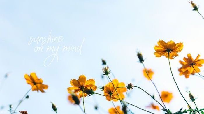 sunshine on my mind, rose gold iphone wallpaper, yellow flowers, blue sky