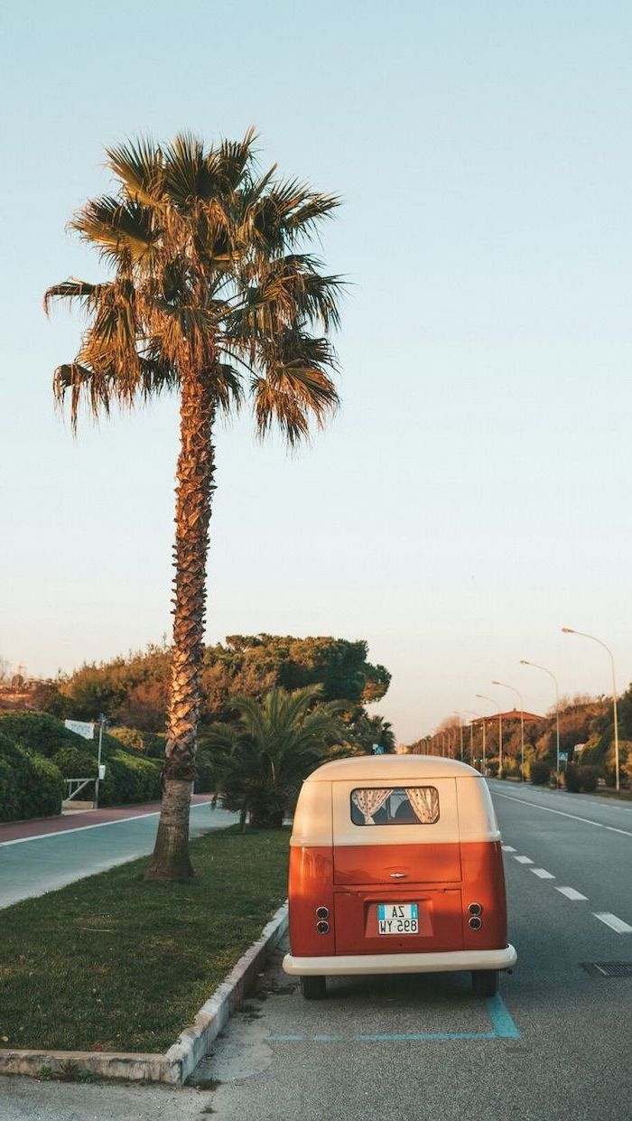 tall palm tree, on the side of the road, parked van, cute quote wallpapers