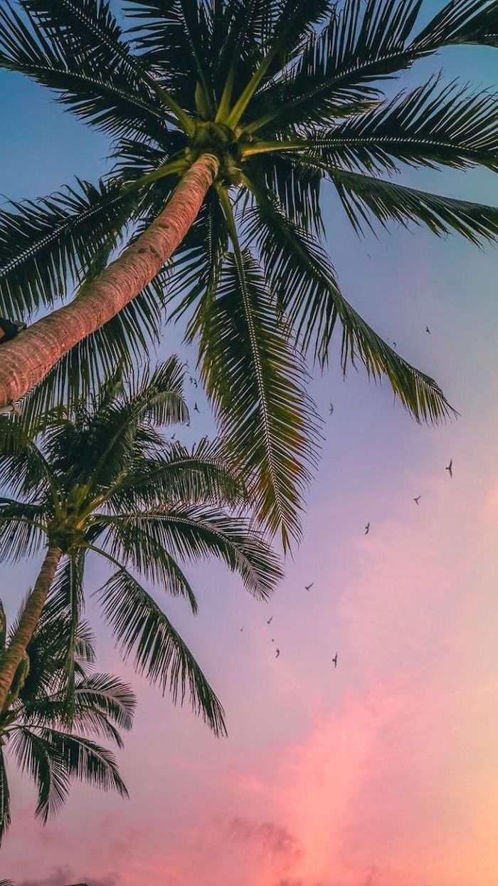 sunset sky, tall palm trees, cute quote wallpapers, birds flying