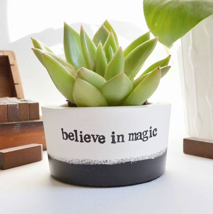 believe in magic, ceramic pot, cubicle decor, potted succulent, on white desk