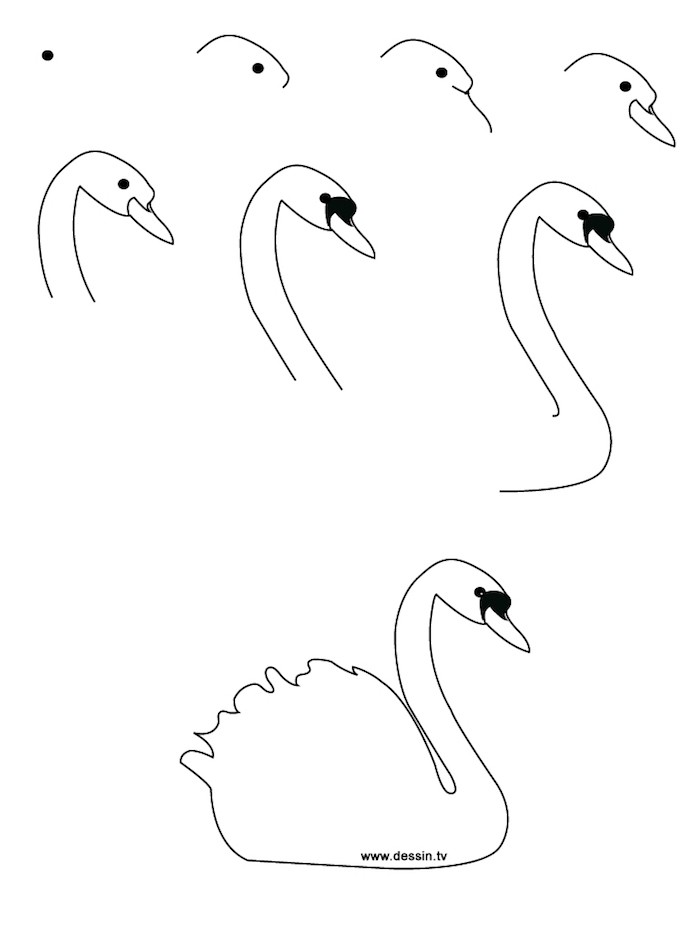 black and white sketch, step by step, diy tutorial, tracing pictures, how to draw a swan