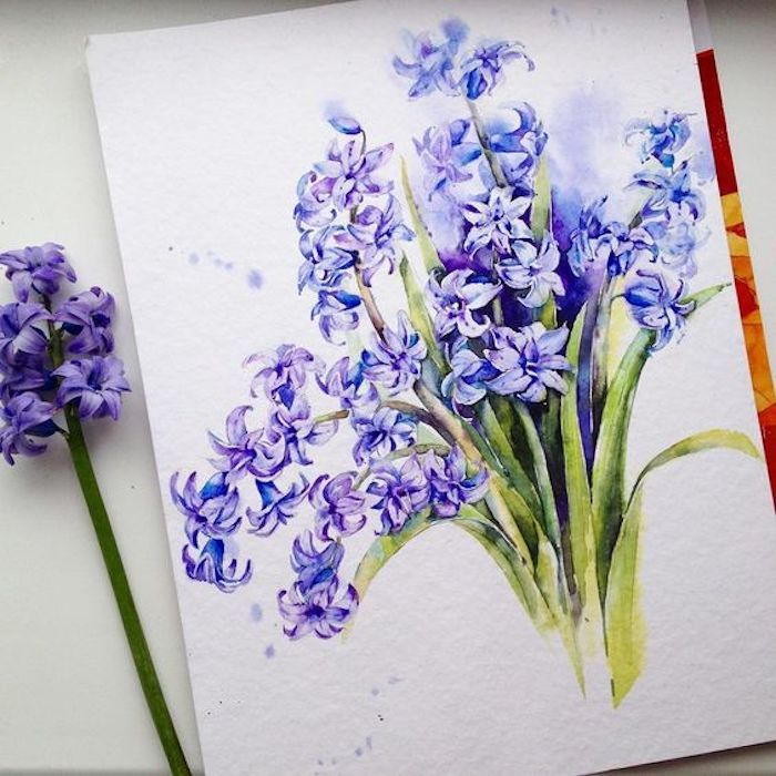 hyacinth flower, shades of purple, shades of green, white background, traceable pictures