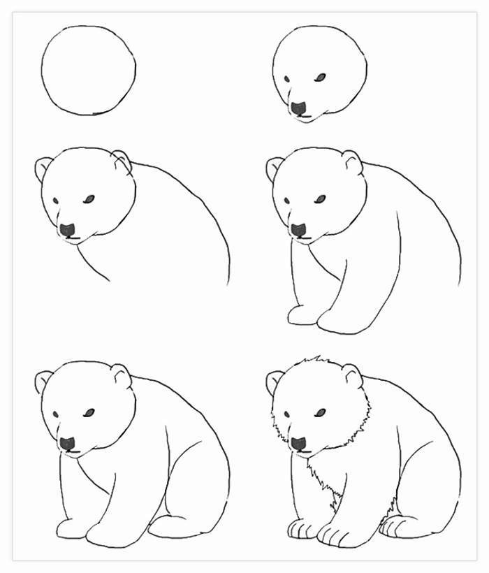 black and white sketch, drawing images, how to draw a bear, step by step, diy tutorial