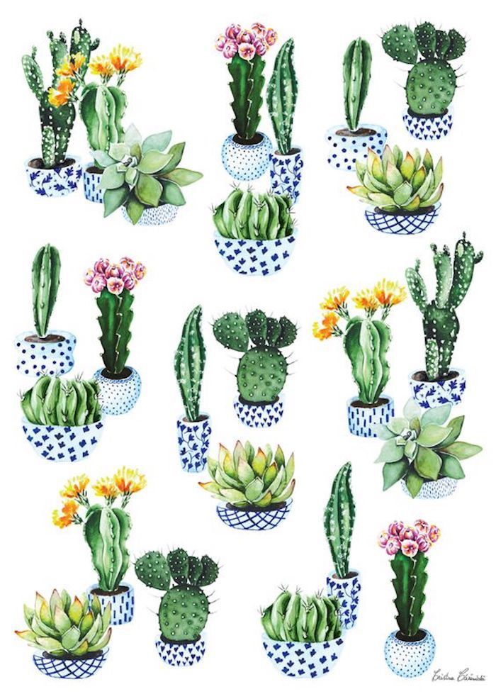 pots of cactuses, different succulents, traceable pictures, colorful pots, white background