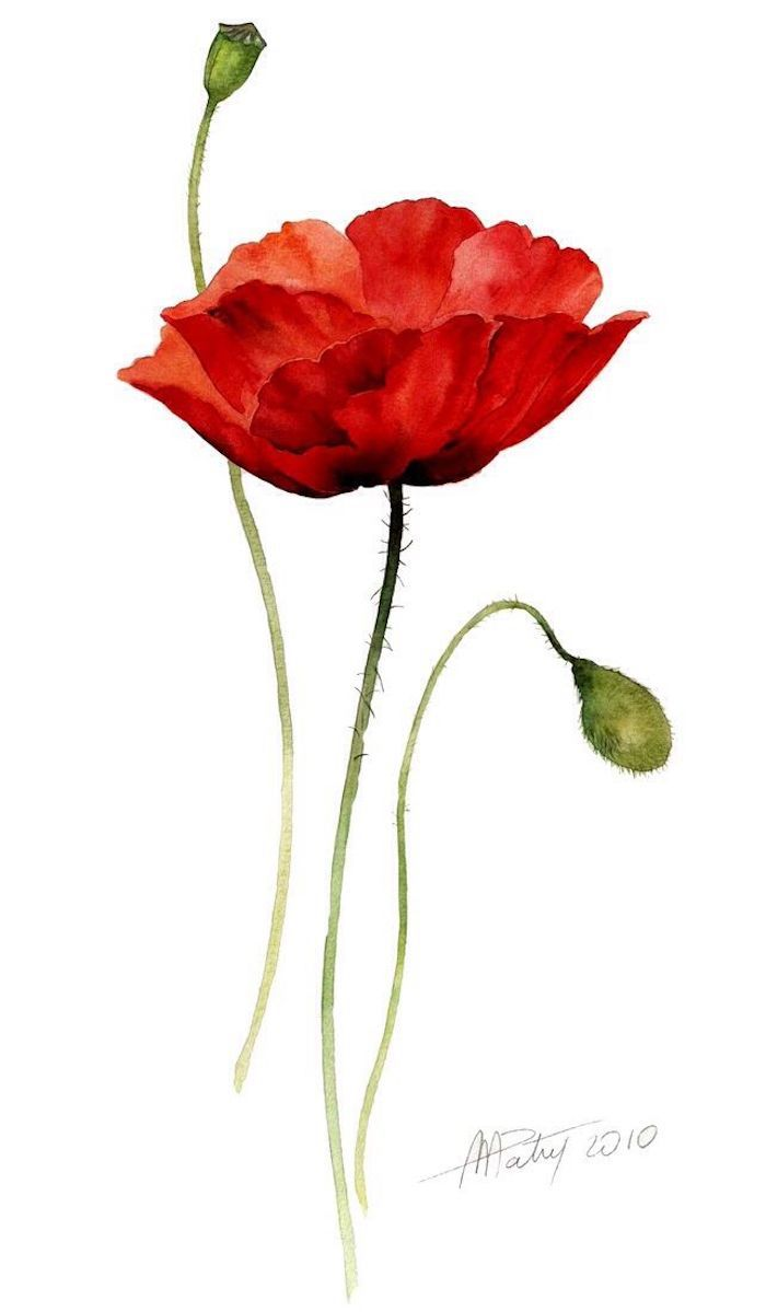 poppy flower drawing, pictures of drawings, white background, red and green paint