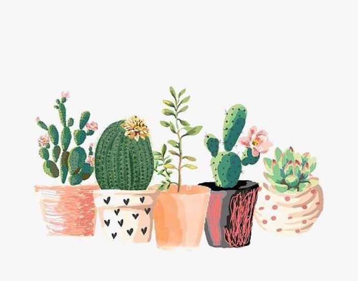 pots of cactuses, different succulents, pictures of drawings, colorful pots, white background