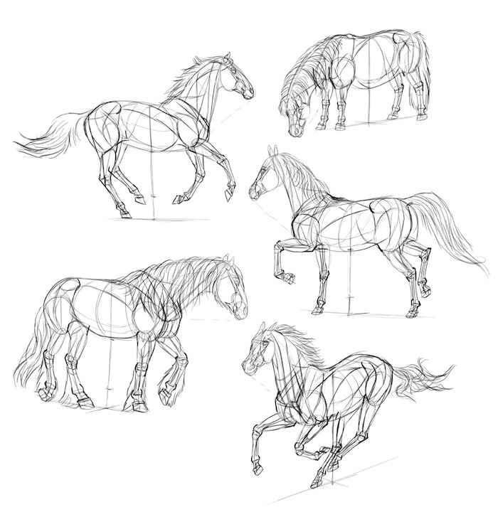 step by step, how to draw a horse, things to trace, diy tutorial, black and white sketch