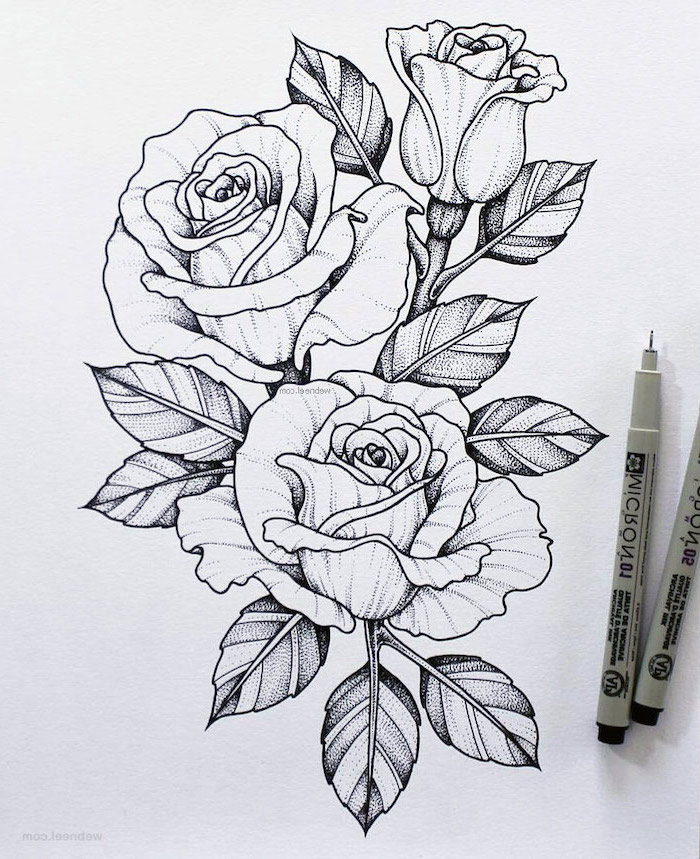 three roses, white background, black pencil sketch, how to draw a rose step by step