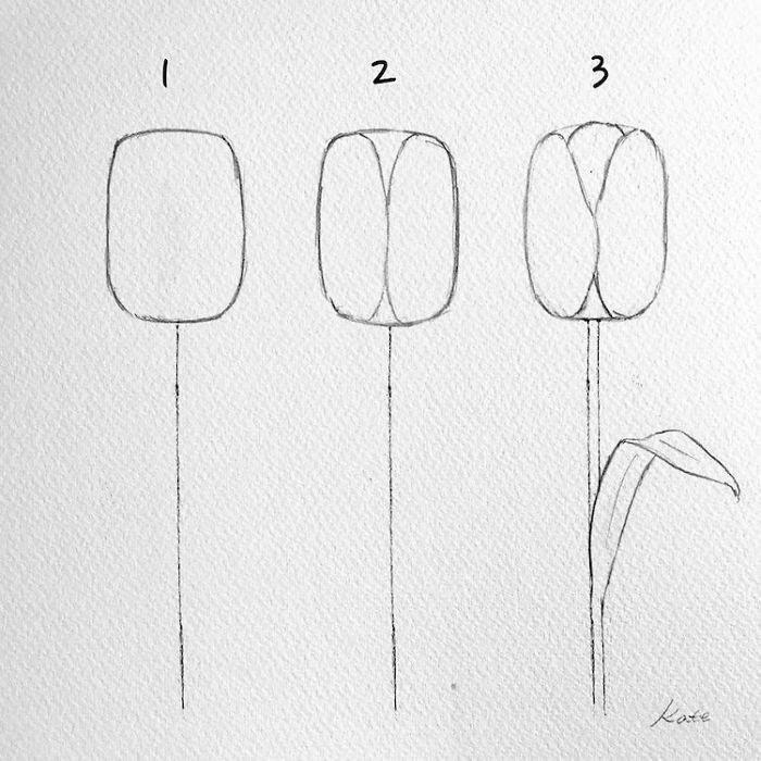 step by step drawing, how to draw a tulip, step by step, diy tutorial, black pencil sketch, white background