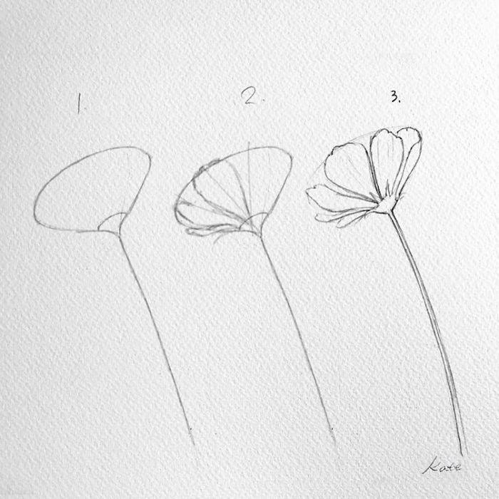 white background, black pencil sketch, easy flowers to draw, step by step, diy tutorial