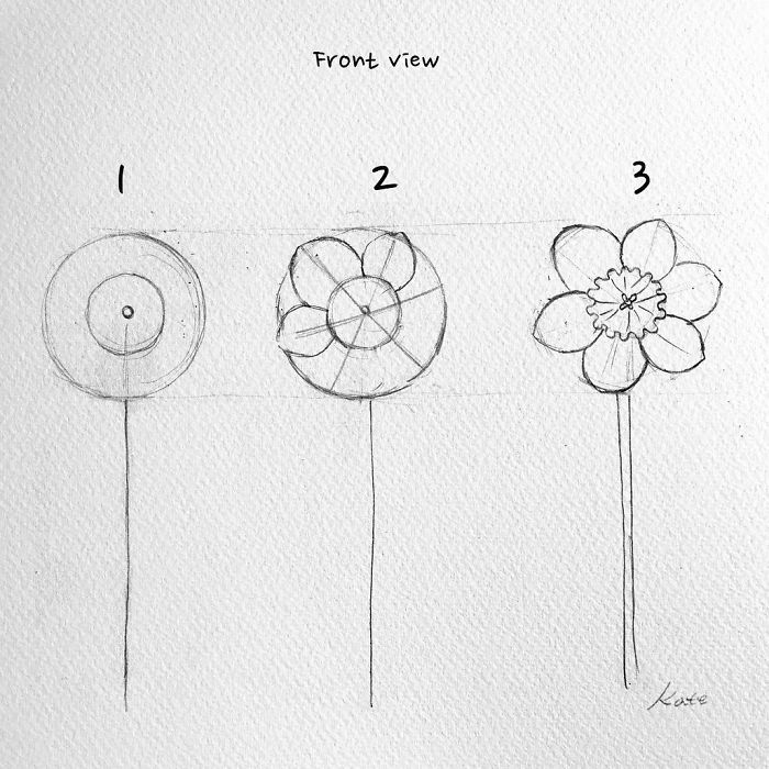 front view, how to draw a daffodil, easy pictures to draw, step by step, black pencil sketch, diy tutorial