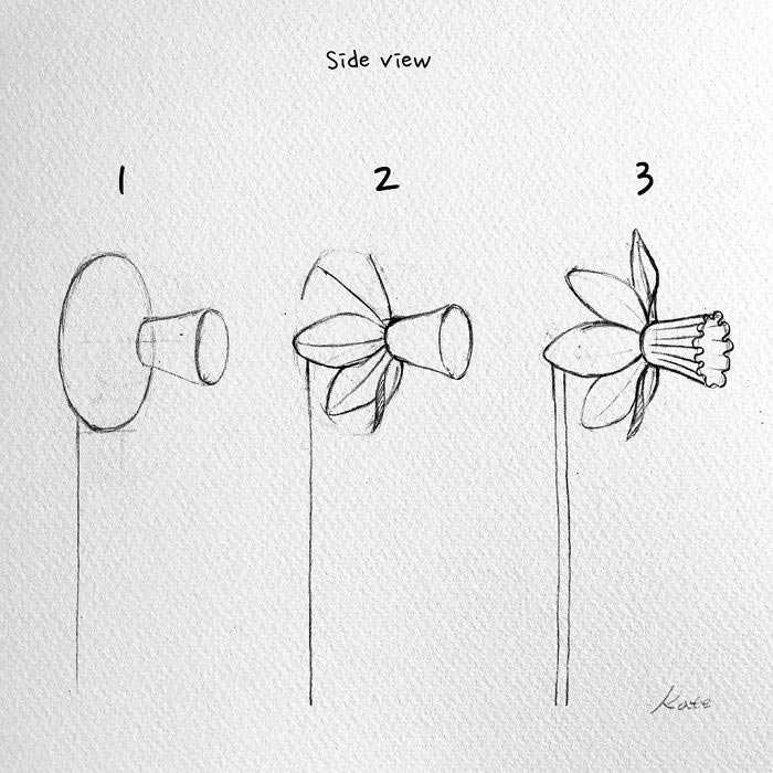 easy pictures to draw, side view, how to draw a daffodil, black pencil sketch, white background