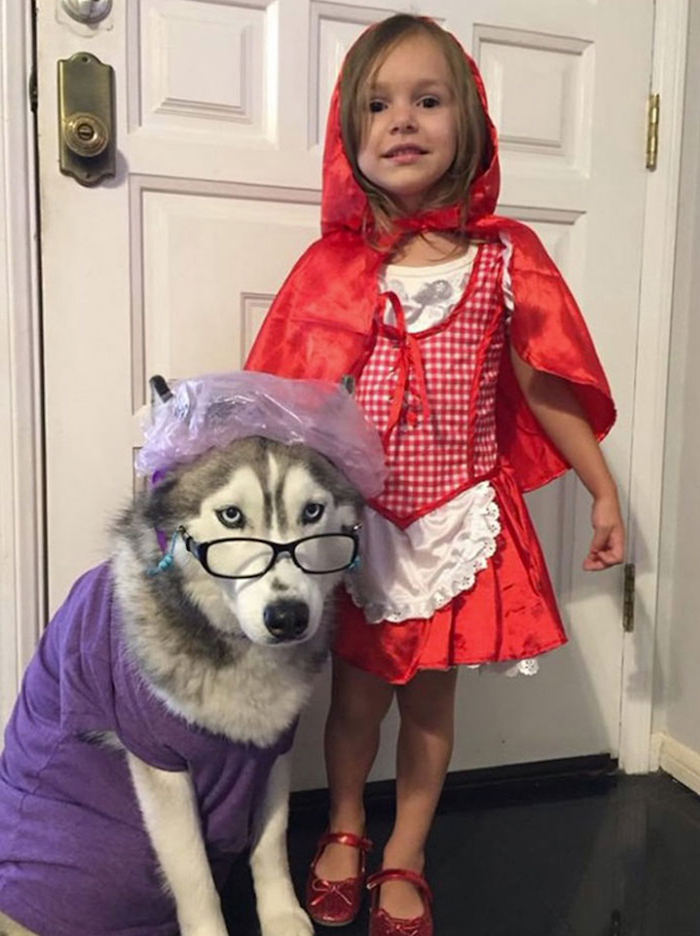 girl dressed as red riding hood, cute halloween costumes for girls, dog dressed as the wolf, with glasses