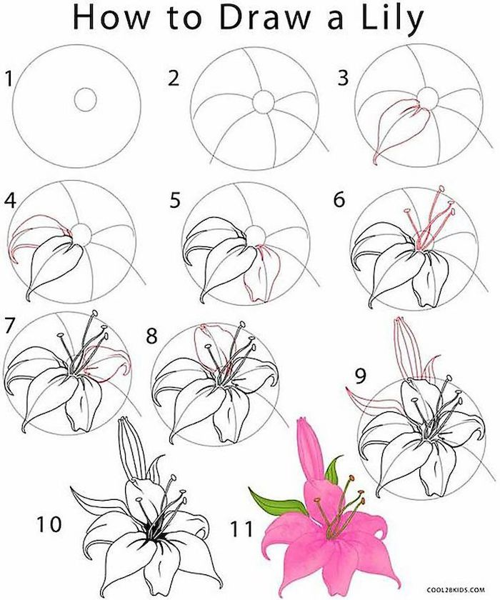 how to draw a lily, rose drawing step by step, diy tutorial, black pencil sketch, white background