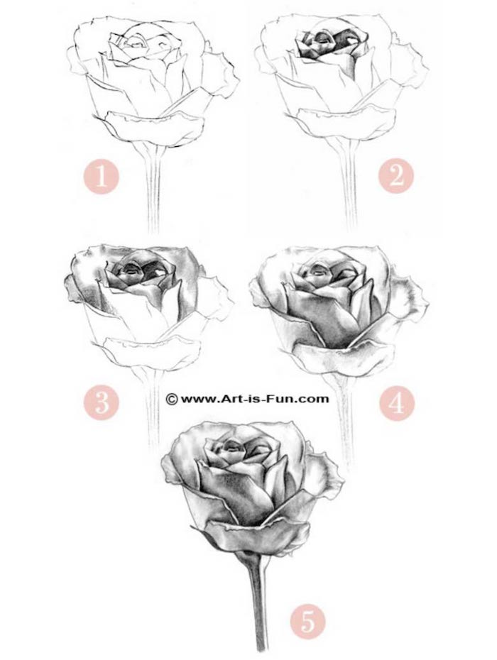 how to draw a rose, step by step, diy tutorial, drawing pictures of flowers, black pencil sketch, white background