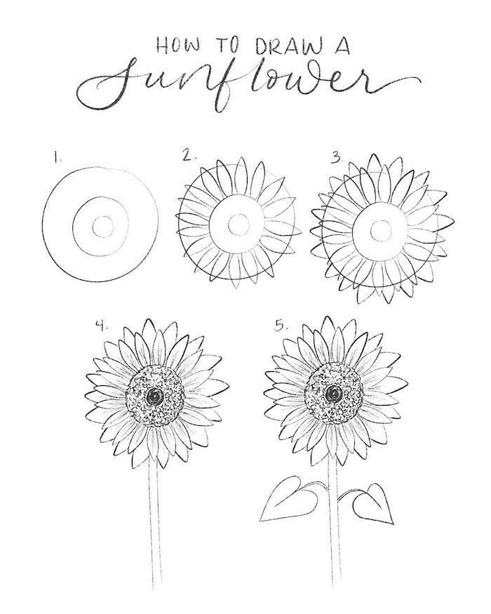 white background, black pencil sketch, how to draw a flower easy, step by step, diy tutorial