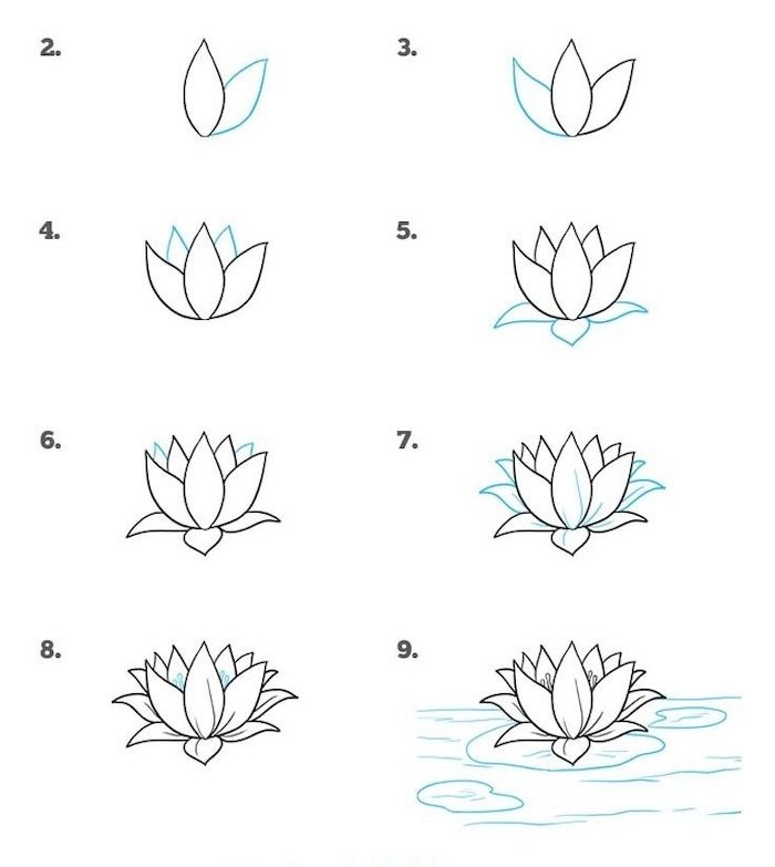 how to draw a water lily, how to draw a flower easy, step by step, diy tutorial, white background