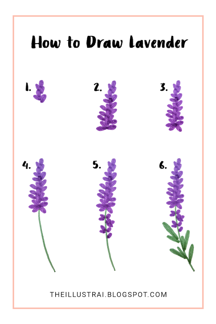 how to draw lavender, step by step, diy tutorial, how to draw a flower easy, white background