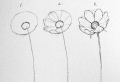 Easy flowers to draw – step-by-step tutorials + pictures
