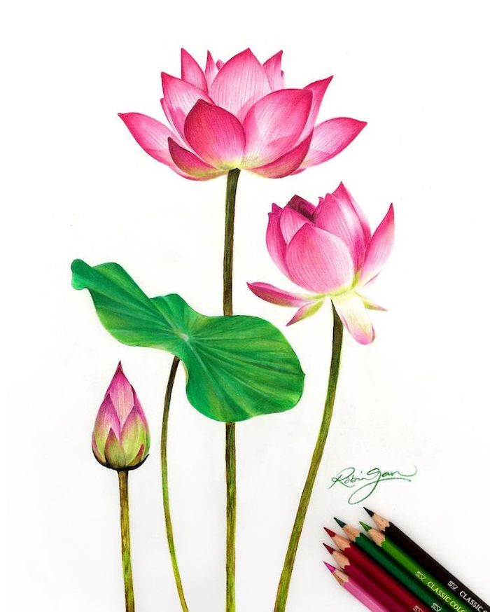 pink lilies, how to draw a flower step by step, colored painting, white background, colorful pencils