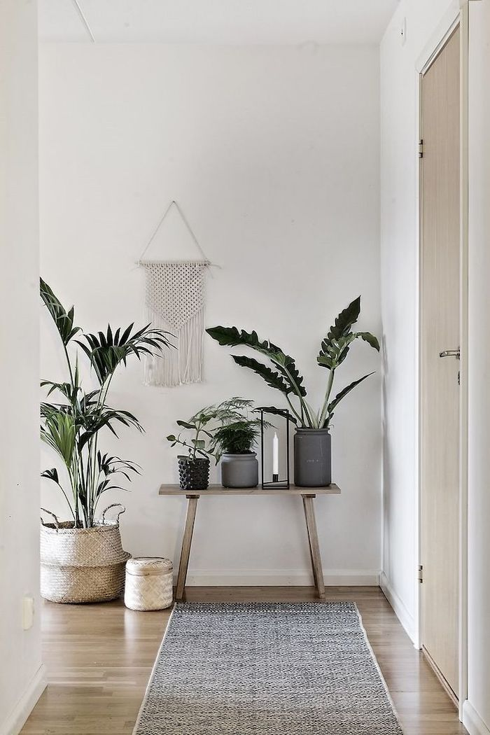 potted plants, arranged on a wooden table, wooden floor, update your entrance hall, grey rug, wooden door