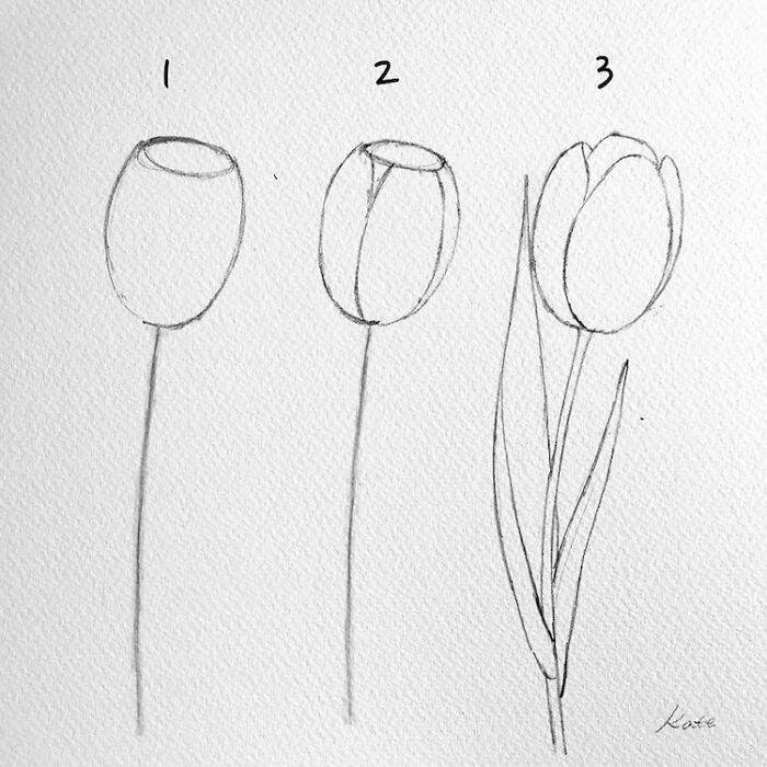 black pencil sketch, white background, step by step drawing, how to draw a tulip
