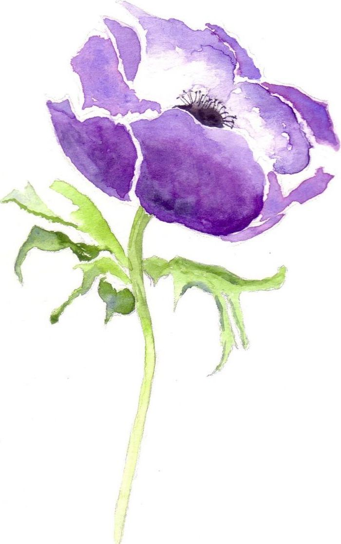 purple flower, watercolor painting, on white background, how to draw a flower step by step