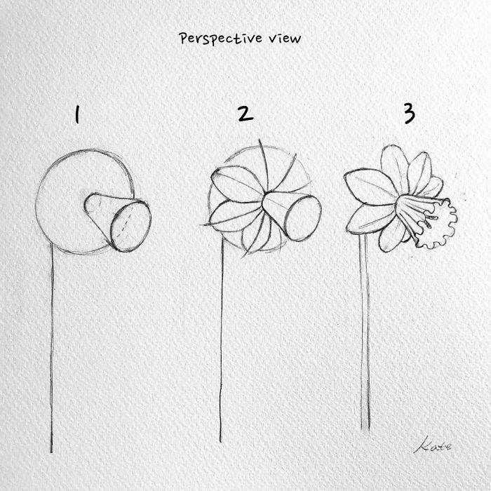 perspective view, how to draw a daffodil, step by step, diy tutorial, black pencil sketch, step by step drawing