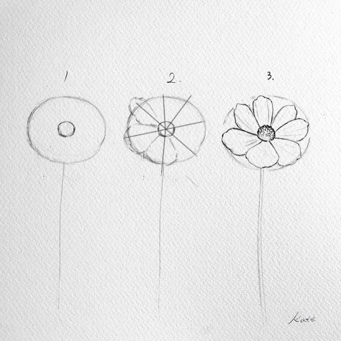 how to draw a flower, easy flowers to draw, step by step, diy tutorial, black pencil sketch, white background
