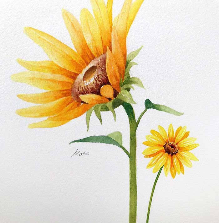 two sunflowers, on white background, watercolor painting, rose drawing easy