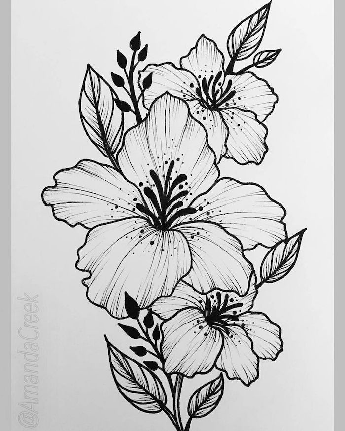black pencil sketch, on white background, three orchids, cool simple drawings