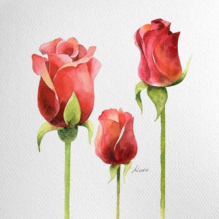 three roses, rose drawing easy, on white background, watercolor painting