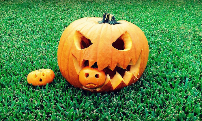 small pumpkin, eaten by a large pumpkin, halloween pumpkin carvings, another small pumpkin, green grass field