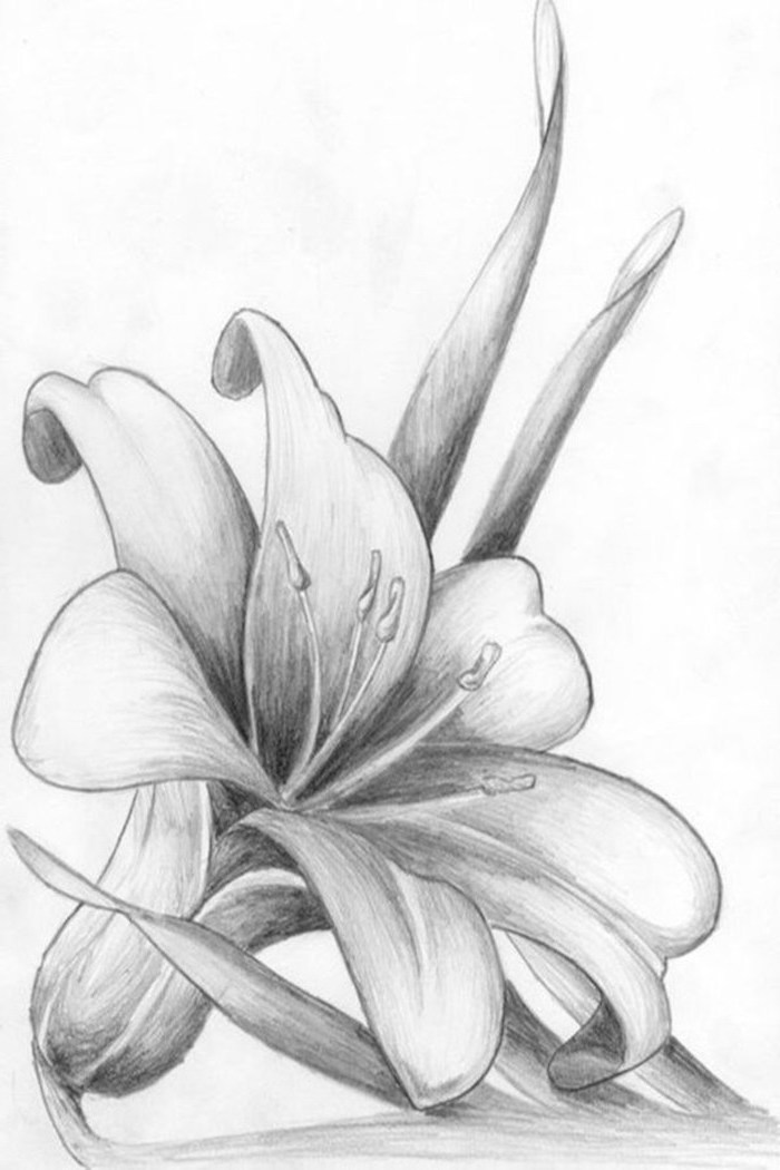 Easy Flowers To Draw Step By Step Tutorials Pictures Architecture Design Competitions Aggregator