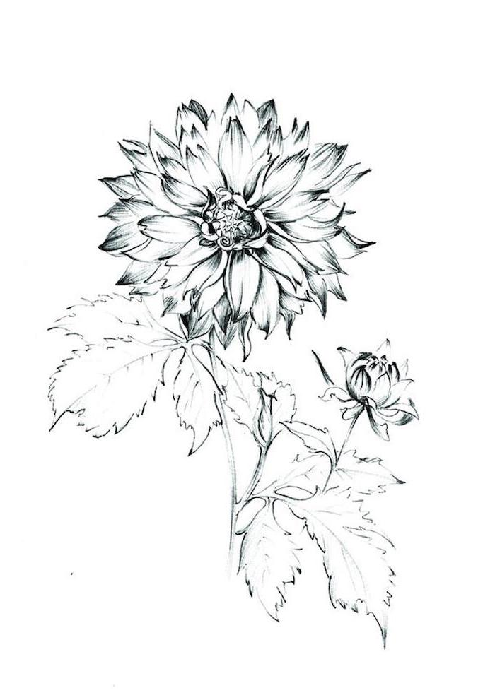 pretty flowers to draw, black pencil sketch, on a white background
