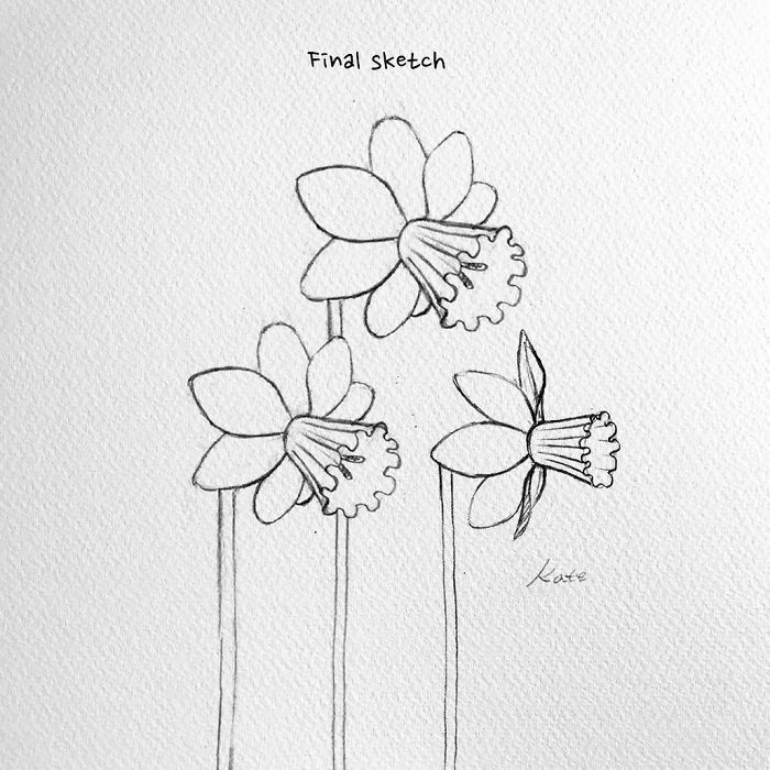 final sketch, three daffodils, black pencil sketch, white background, easy pictures to draw