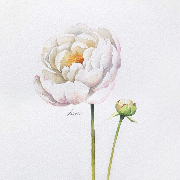 white background, white flowers, watercolor painting, flower doodles