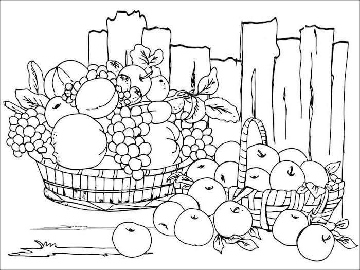 basket full of fruits, coloring pictures for adults, grapes and apples, wooden fence, black and white sketch